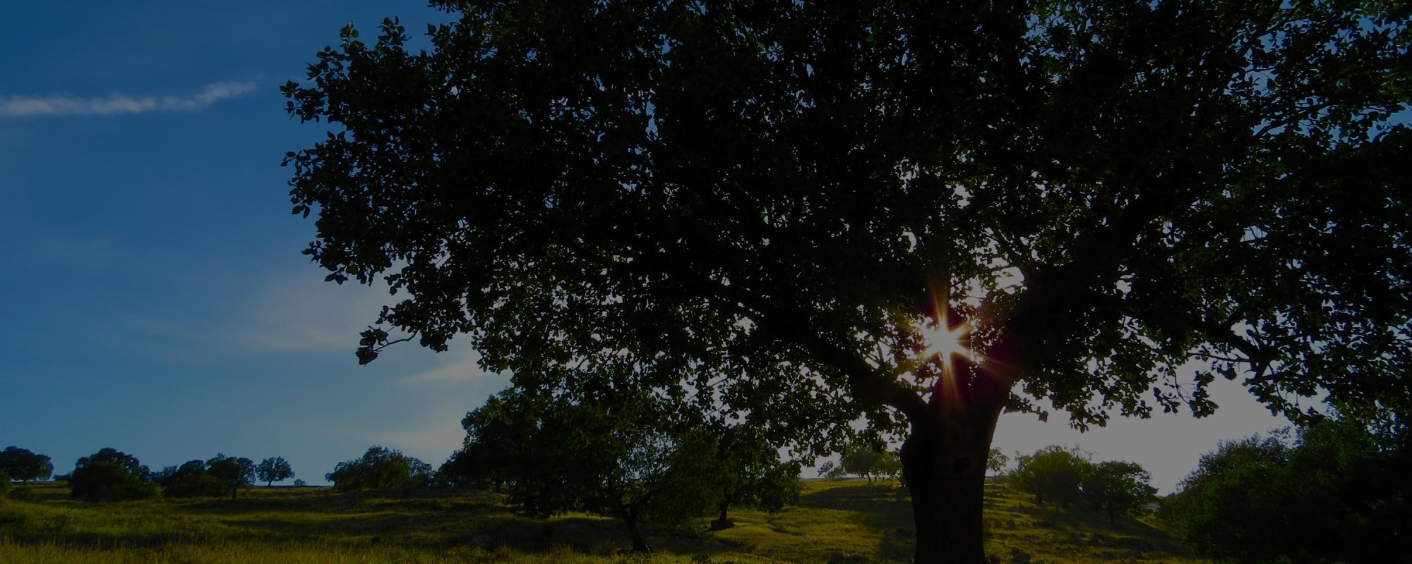tree-3-dark